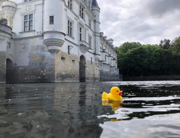Canard au pied de Chenonceau